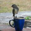 HCL-TTC-Trish Gardiner-Smith Sharing a cup of tea