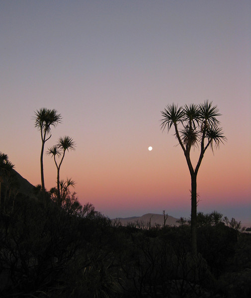 Cabbage trees at Cape Palliser.  A sunset walk along the coast to camp for the night by Aorangi Forest Park