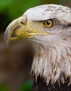 7. Eagle Eyes
