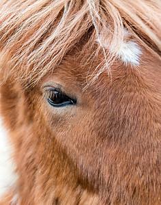 5. Shetland Pony