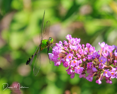Dragonfly at the Philbrook