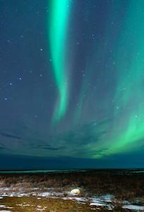 Arctic Dreamer, SE of Churchill, Manitoba, Canada