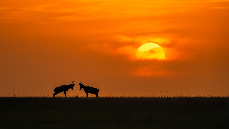 Award : At The Sunset - By Jun Zuo