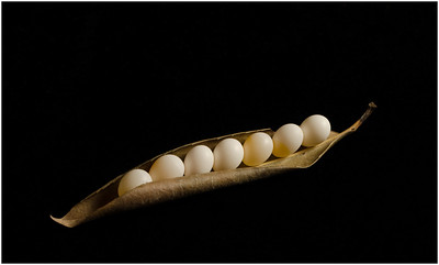 Eggs in a Pod