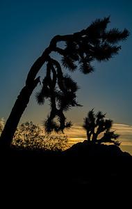 Seuss Sunrise