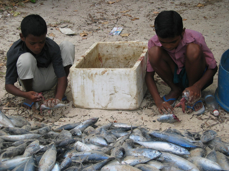 Children cleaning fish, Maldives. Credit: Red Cross