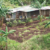 Local housing and garden in Jayapura, Indonesia. Credit: New Zealand Ministry of Foreign Affairs and Trade