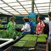 Pilot aquaponics project, Cook Islands. Credit New Zealand Ministry of Foreign Affairs and Trade