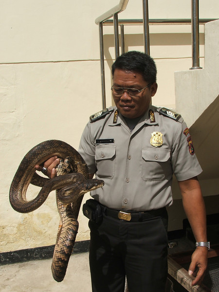 The snake can detect alcohol on the breath of Police officers on duty, Indonesia. Credit: New Zealand Ministry of Foreign Affairs and Trade