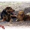 Chestnut Park 041807025