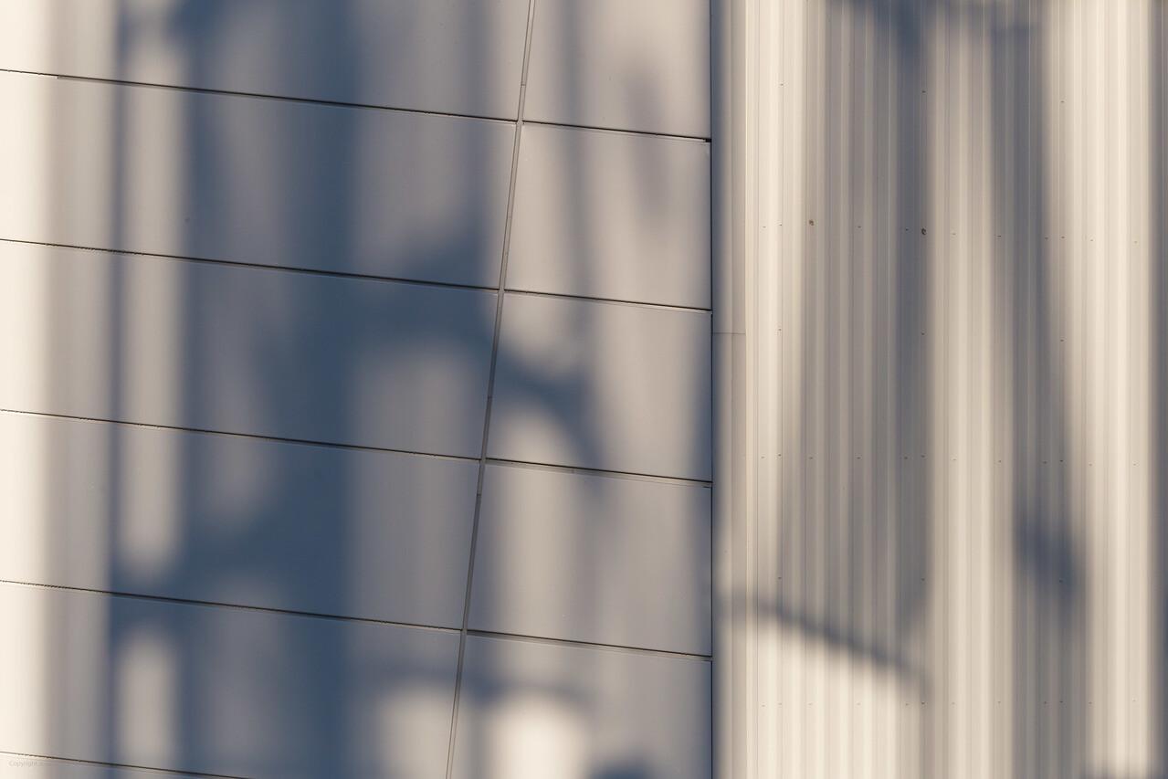 Ripley Shadows 1