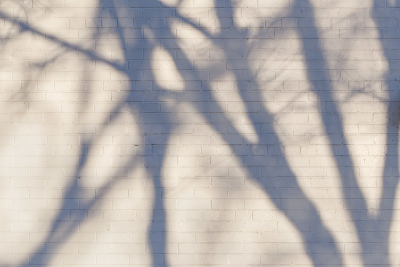 Harbourfront Shadows