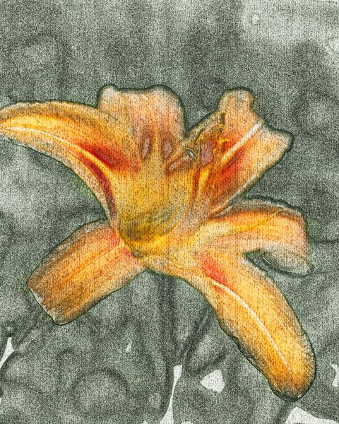 Tiger Lilly in Pastels