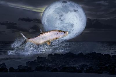 Tarpon Moon