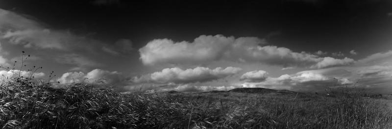 Grassloop