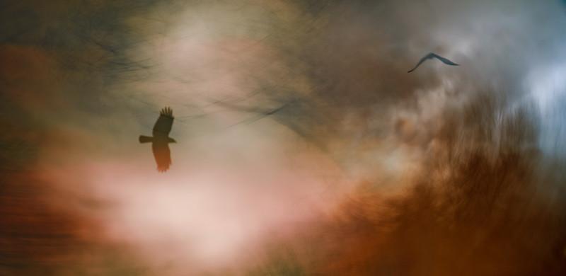 When Crows Dream