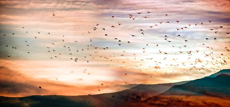 Flight of 1000 Birds