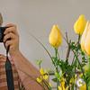Tulips (DOF composite)