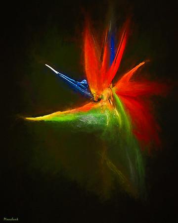 Bird of Paradise Nebula