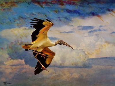 Stork Fly Bye...