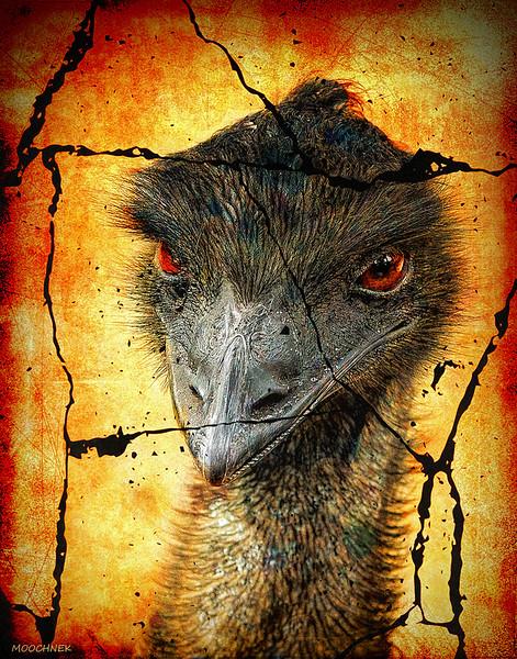 Dante's Hell For Emus