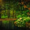 Paradise Pond