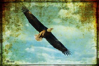 Mr Eagle