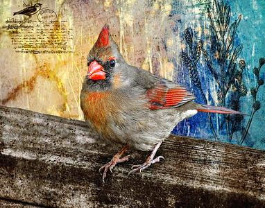 CardinalPost Card