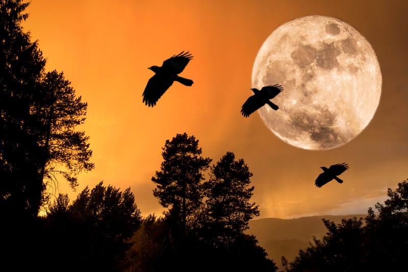 Three Crow Golden Night
