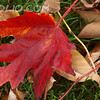 BCTHD091221-BE-1 -Fall - Leaf Me Alone