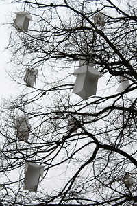 Paper lanterns in the trees outside St. Pierre cathedral.