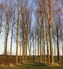 171213-db-treeswallpaper