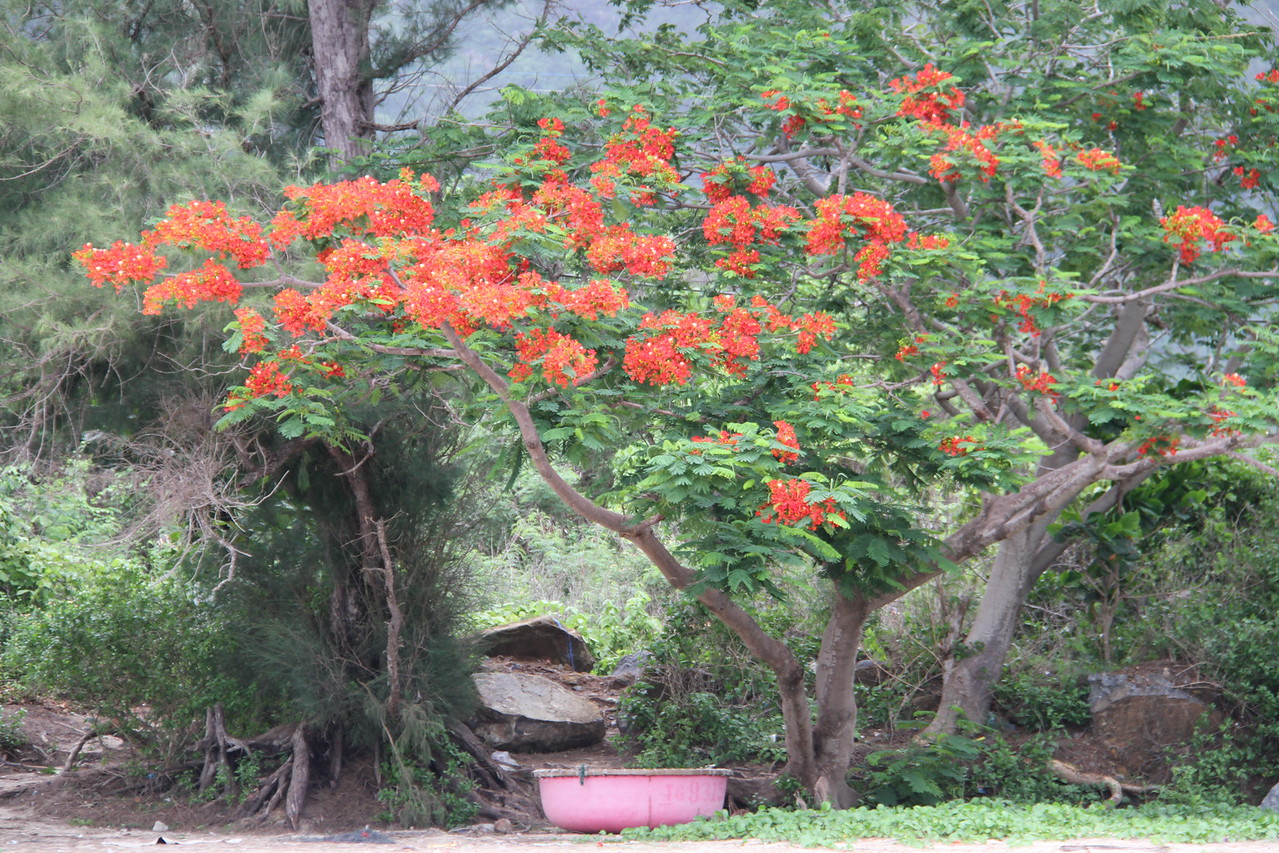 Flame tree with coracle