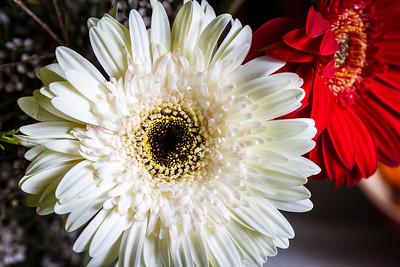 140414_Spring_Flowers008