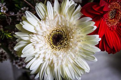 140414_Spring_Flowers005