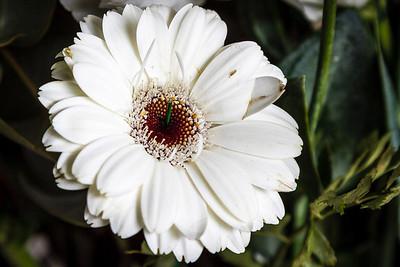 140414_Spring_Flowers021