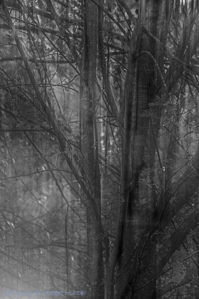 Fog among the Branches 1