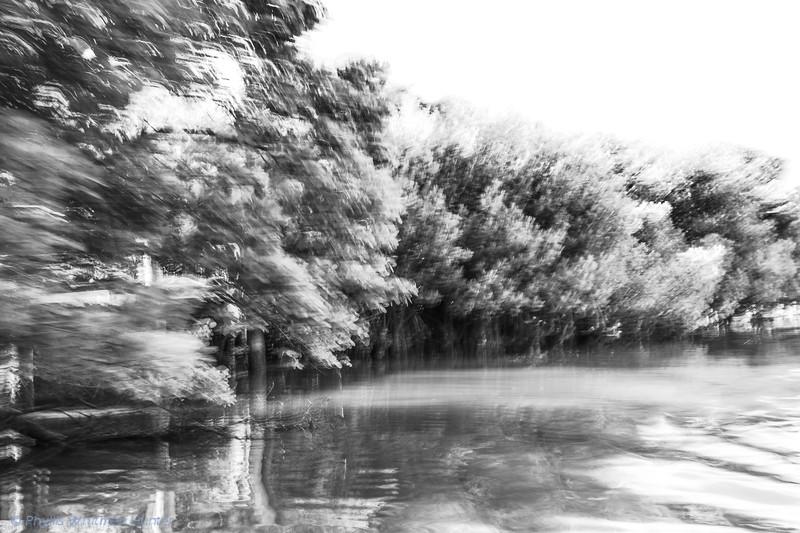Mysterious Mangroves