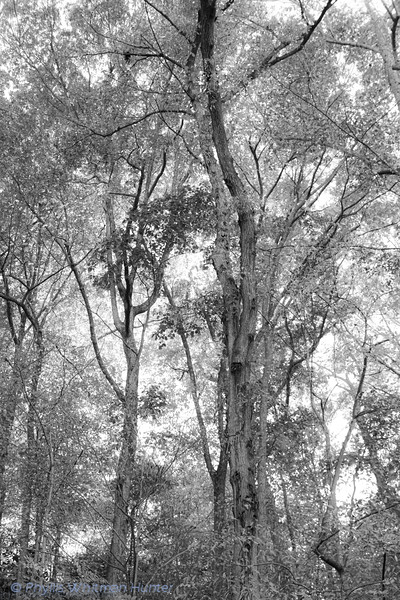 Forest Textures Fall 3 B&W
