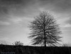 Tennessee Tree