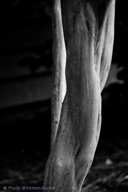 Shapes of a Crepe Myrtle