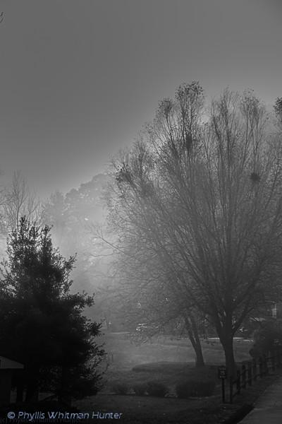 Evvening Fog 2