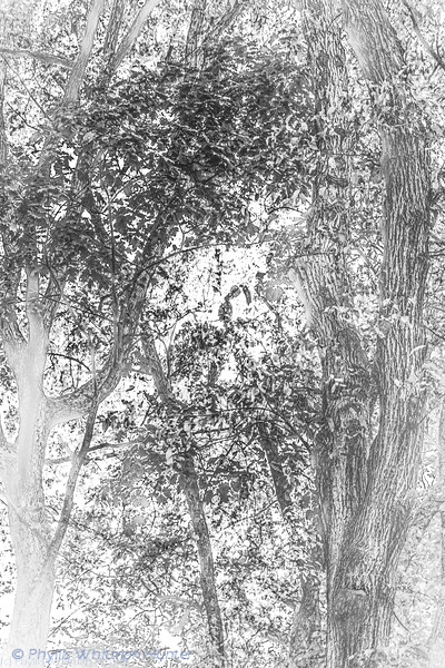 Forest Textures Fall 2 B&W