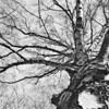 branches (Midlake)<br /> Berlim, 2007