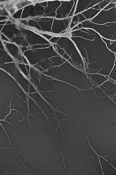 Branches in White 3