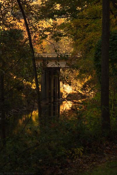 Riverbank Reflections 2