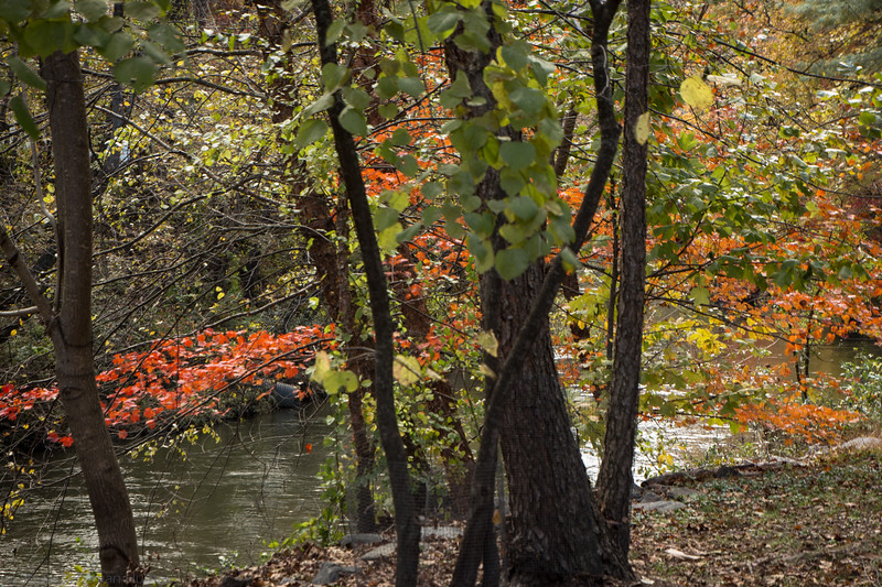 Early Fall by the River
