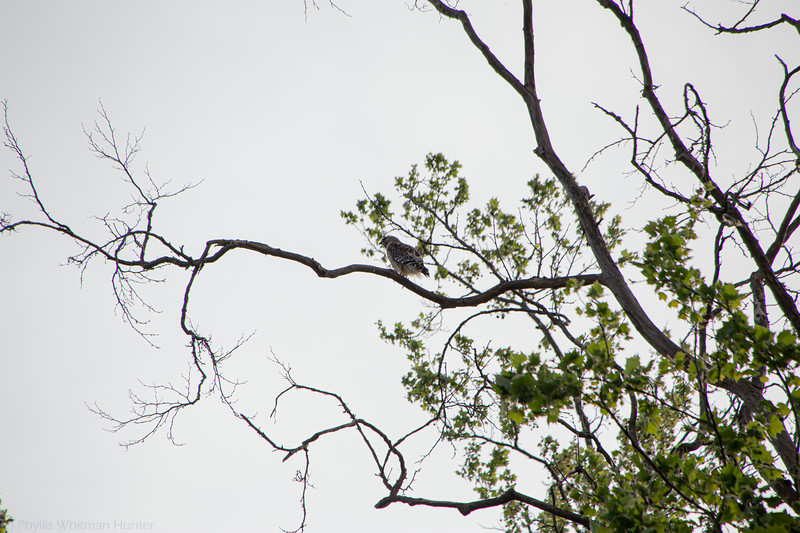 Bird on a Branch 1