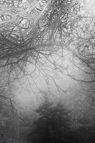 Entanglements in Black and White 2