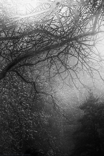 Entanglements in Black and White 1